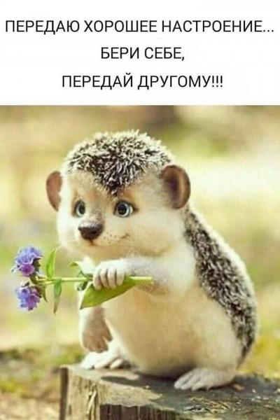 inv-2610-23 Новикова Наталья